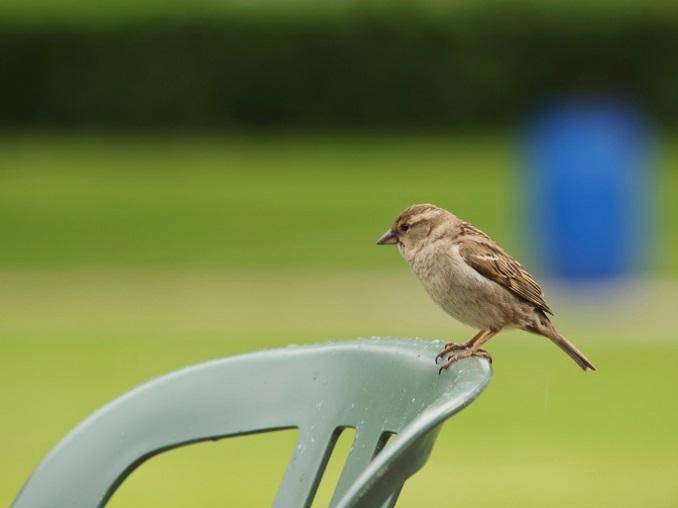 Immer mehr Vögel zieht es in Siedlungsräume. © scubaluna/iStock/Thinkstock