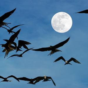 Vollmond Zugvögel