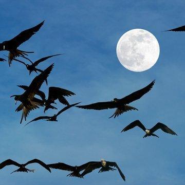 So beeinflusst der Mond unser Leben