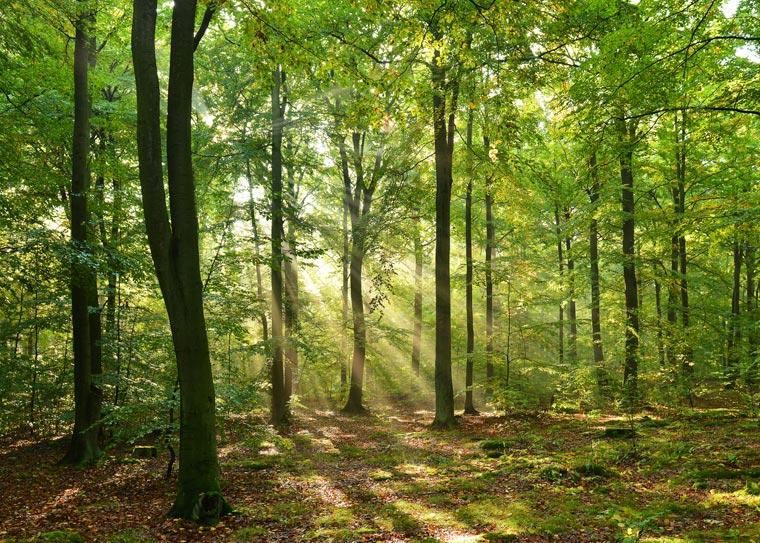 Zusammen mit den Weltmeeren gehören Wälder zu den wichtigsten CO2-Kompensatoren im Klimasystem