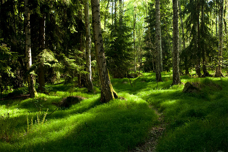 Der Wald - eines der wichtigsten Ökosysteme