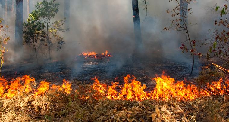 Temperatur, Niederschlag, Bodenfeuchtigkeit, Windstärke ? das sind die entscheidenden Parameter für die Entstehung von Waldbränden.