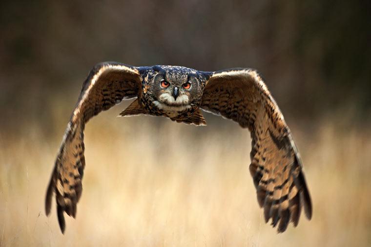 Das Massensterben der Vögel: Waldkauz