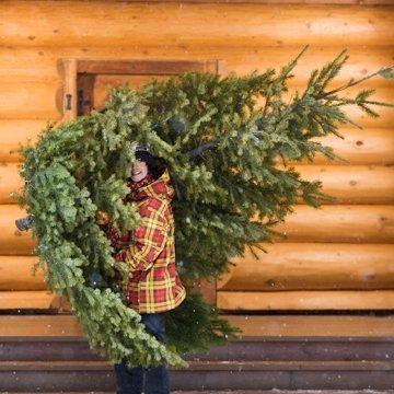 Hier finden Sie faire Weihnachtsbäume