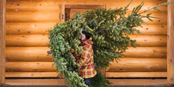 Faires Weihnachtsfest: Hier gibt es die fairen Weihnachtsbäume