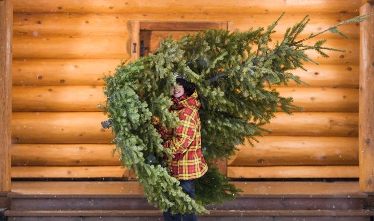 Sein Aufenthalt im Wohnzimmer mag relativ kurz sein, doch immer mehr Menschen holen sich bewusst einen fair gehandelten Baum nach Hause und tragen somit zu einer gerechteren Gesellschaft bei.