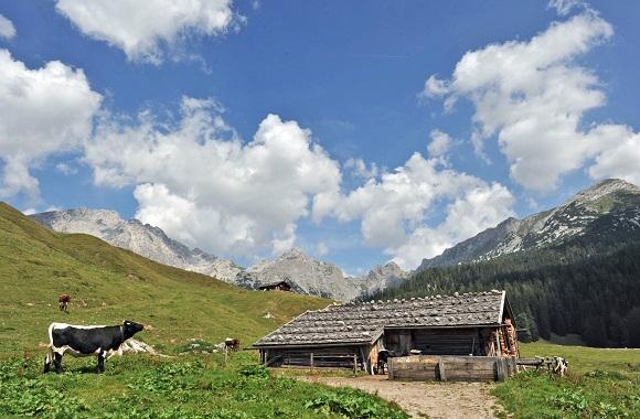 EuRegio-Wiesenmeisterschaft: Auf der Suche nach den schönsten Almen in der Alpenregion