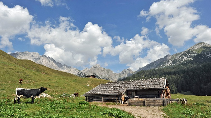 Die Idylle auf der Alm © Die Kuh fühlt sich wohl. © Milchwerke Berchtesgadener Land Chiemgau EG