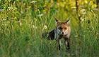 Wildes NRW: Die schönsten Tierfotos