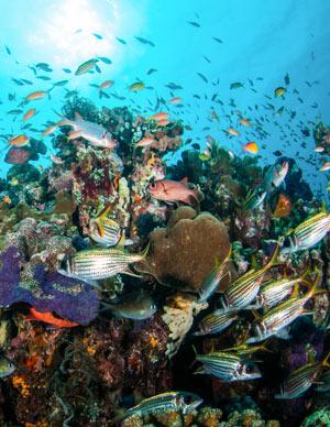 Artenvielfalt in den Meeren