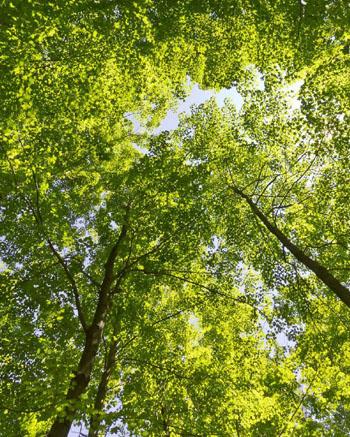 Je verkauftes nachhaltiges Produkt unterstützt toom das Projekt von Naturefund e.V. © toom Baumarkt