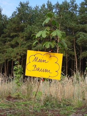 Ein Baum als Geschenk für die Aufforstung von brachliegenden Flächen © baldwald