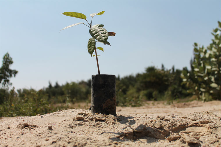 Wie aus Wüsten Wälder werden