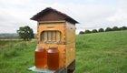 Honig sammeln ohne die Bienen zu stören