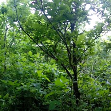 Baumpatenschaften verschenken
