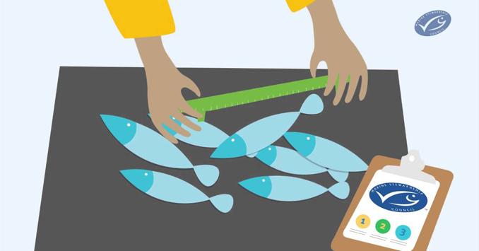 Eco Fisch