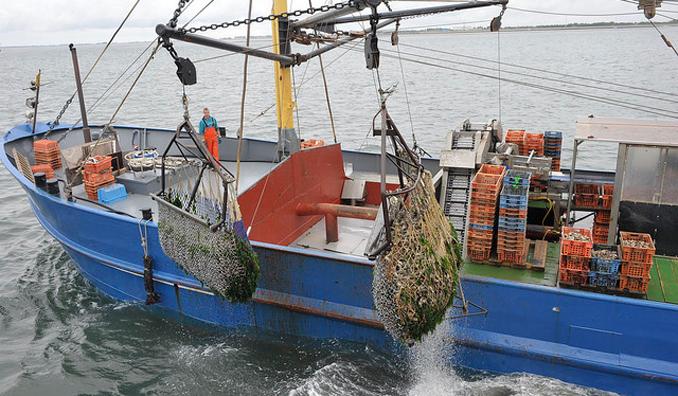 Fisch nachhaltig
