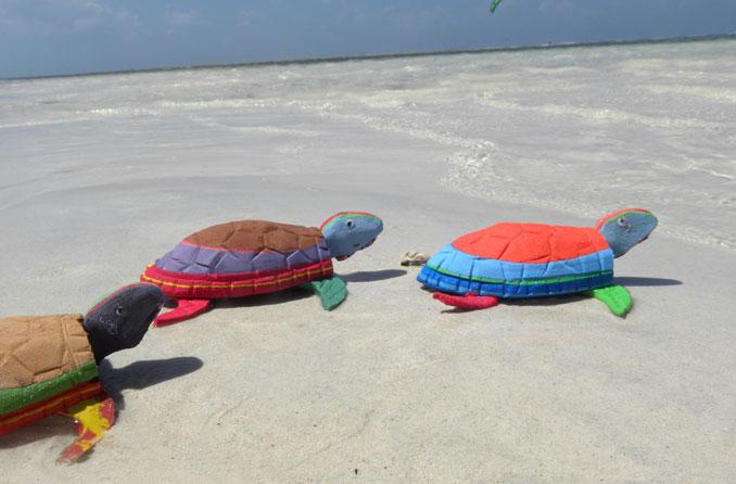 Fli Flop Schildkröten auf ihrem Weg ins Meer