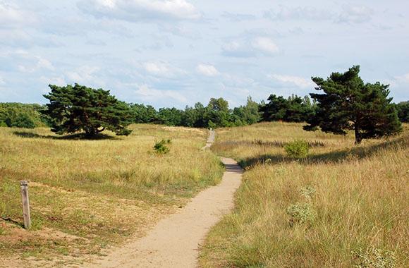 Mainzer Naturschutzgebiet mit seltener Flora und Fauna