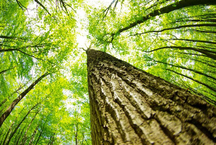 Der Streit um einen naturnahen Wald
