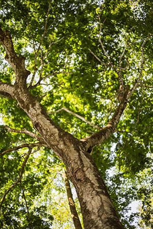 Wie geht es unseren Wäldern wirklich?