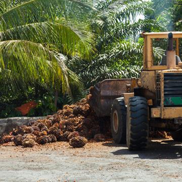 Palmöl-Plantagen gefährden das Weltklima