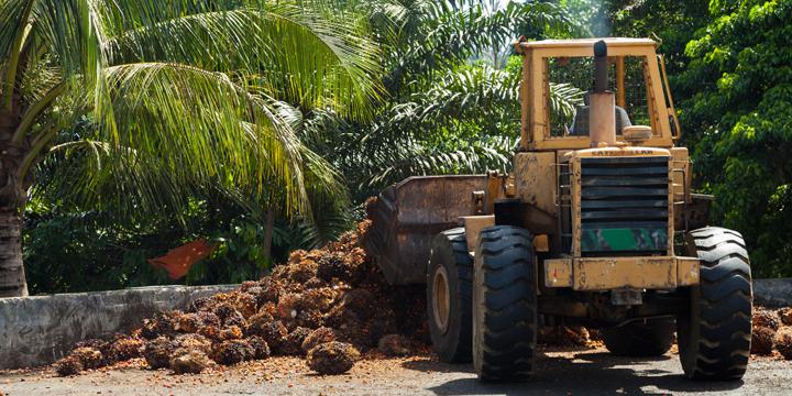 Palmöl Produktion: Verheerende Folgen von Brandrodung bis Ausbeutung