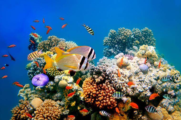 Wissenschaftsjahr 2016 Meere und Ozeane