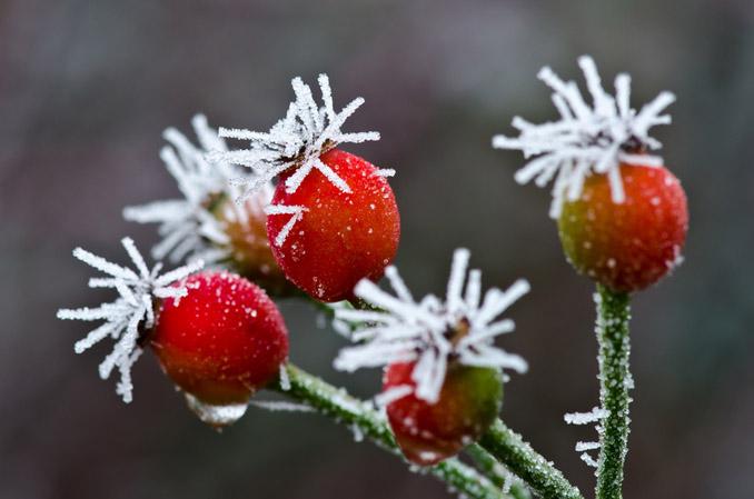 Frost Eisblumen