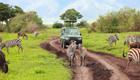 Safaris tragen zum Umweltschutz bei
