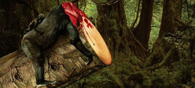 Natur schützen extrem sanctuary asia