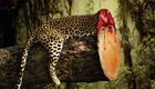 Naturschutzmagazin schockt mit Print Kampagne