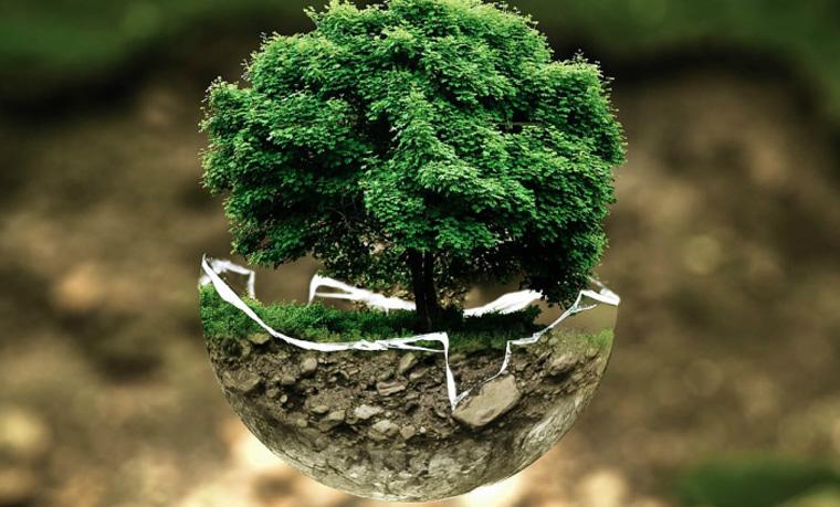 Neue Bäume aus der Luft