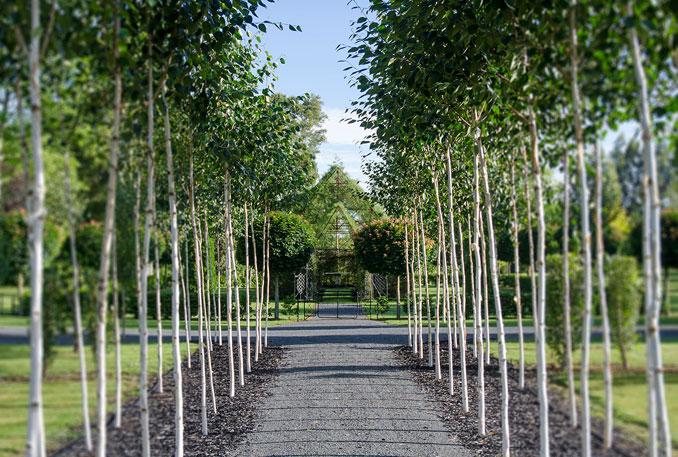 Die Allee zur treechurch ist mit Bäumen gesäumt