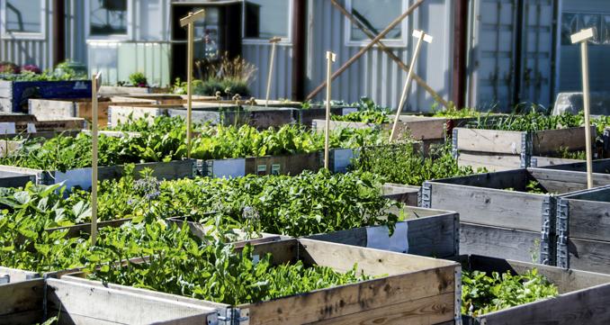 urban gardening kleine wellness oasen in der stadt. Black Bedroom Furniture Sets. Home Design Ideas