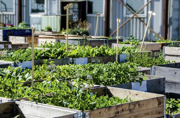 Wellness Oasen durch urbane Gärten