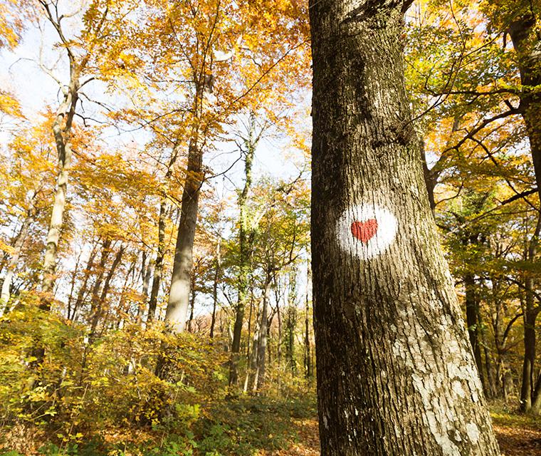 Unsere Wälder brauchen Hilfe