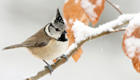 Jetzt Mitmachen Vogelzählung,Stunde der Wintervögel