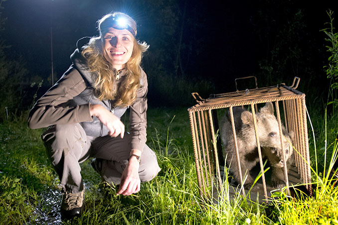 Die Biologin Alexandra Sallay erforscht in Rumänien das Leben von Braunbären. Eine wichtige Frage dabei ist, wie Bären und Menschen koexistieren können. Die beiden Bärenbabys sind Geschwister und sollen wieder in die Natur entlassen werden. © ZDF, Axel Gomille
