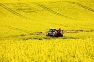Agrosprit wird zum Beispiel aus Raps hergestellt ©iStockphoto