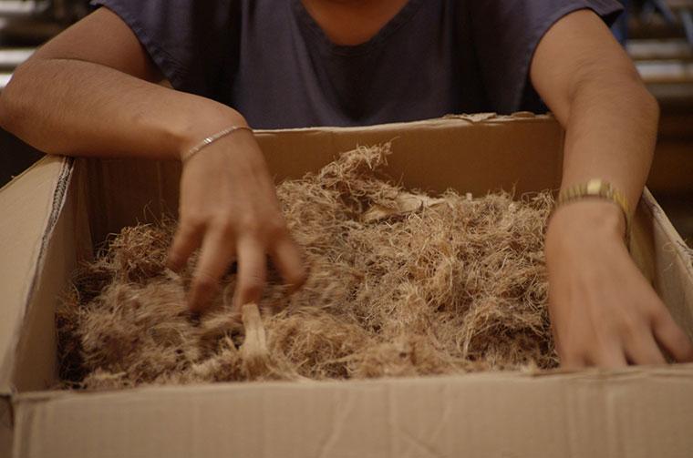 Die Pflanzenfasern der Agave sehen zwar unscheinbar aus, haben aber großes nachhaltiges Potential