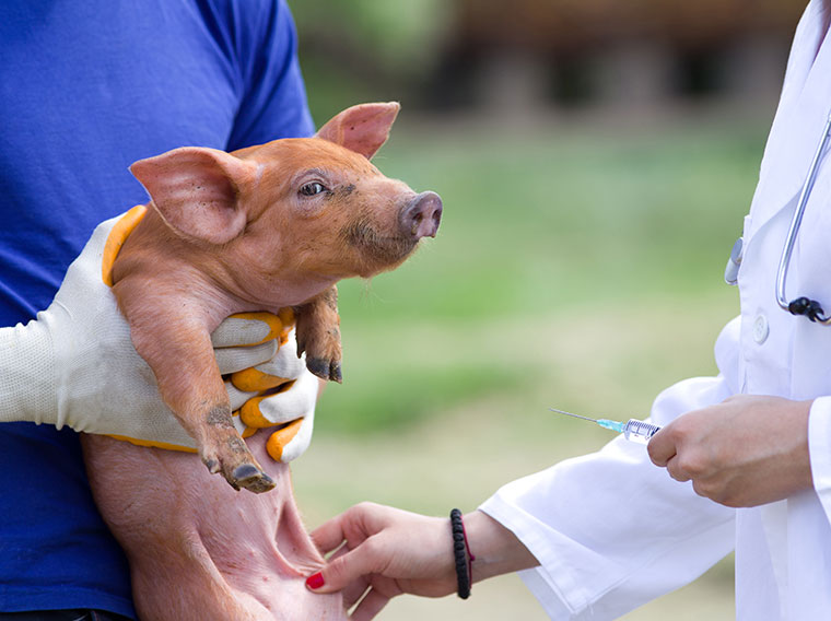 Endlich weniger Antibiotika in der Tierhaltung.