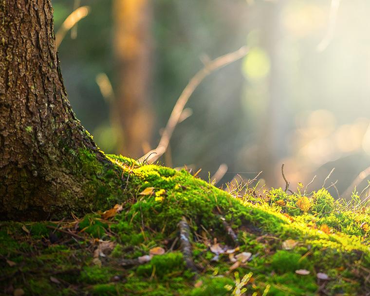 Der Boden in deutschen Wäldern ist nicht mehr so sauer