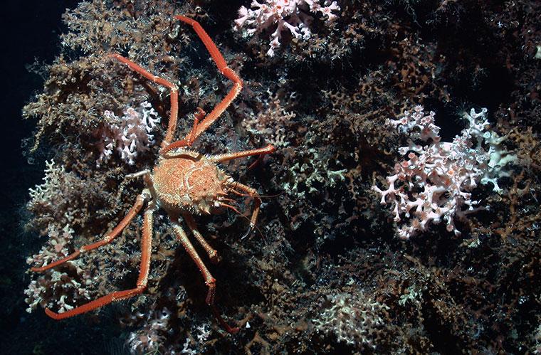Meeresforschung im Zuge des Wissenschaftsjahres.