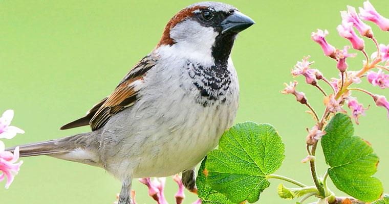 Wie geht es unseren Singvögeln wirklich?