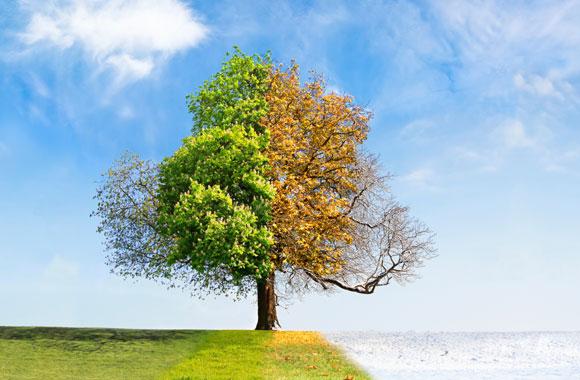 Wie der grüne Wandel funktioniert