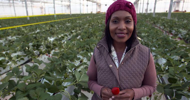 Strawberry Farmer, Yamamoto, Japan, Von Rima Armstrong (BBC)