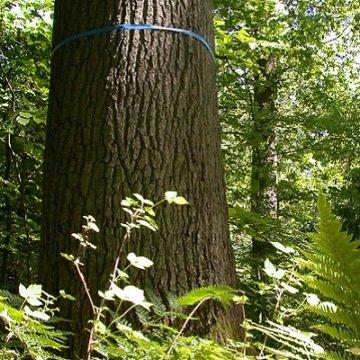 Naturnah: Friedwälder als letzte Ruhestätte