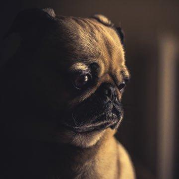 Tierbestattungen – Abschied nehmen vom Haustier