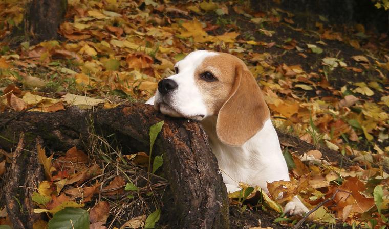Die ?Bios Urn? für Tiere ermöglicht es Haustierhaltern, ihren verstorbenen Gefährten im Garten zu bestatten